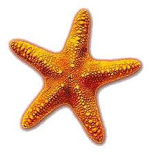 Project Starfish Logo: An Orange starfish on White Background